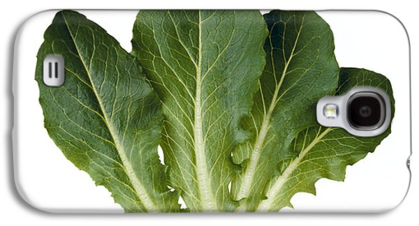 Romaine Galaxy S4 Cases - Agriculture - Baby Green Romaine Leaves Galaxy S4 Case by Ed Young