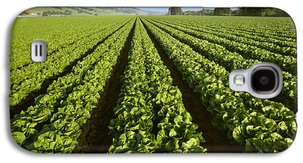 Romaine Galaxy S4 Cases - Agriculture - Field Of Mid Growth Galaxy S4 Case by Ed Young