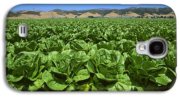 Romaine Galaxy S4 Cases - Agriculture - Field Of Romaine Lettuce Galaxy S4 Case by John Wigmore