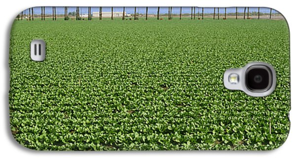 Romaine Galaxy S4 Cases - Agriculture - Mid Growth Field Galaxy S4 Case by Timothy Hearsum