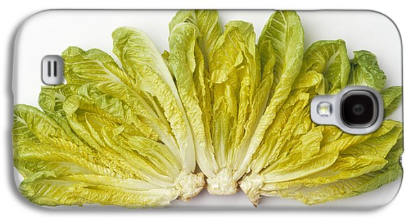 Romaine Galaxy S4 Cases - Agriculture - Romaine Lettuce Hearts Galaxy S4 Case by Ed Young