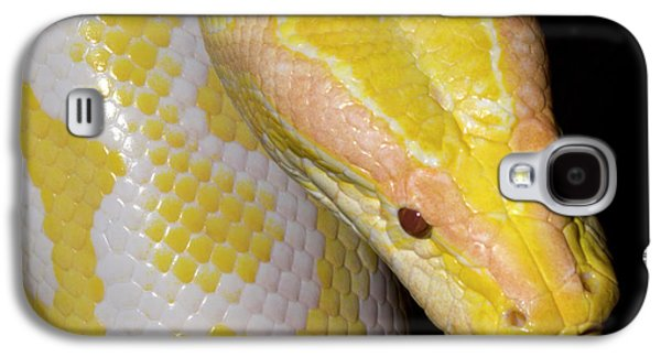Albino Burmese Python Galaxy S4 Case by Nigel Downer