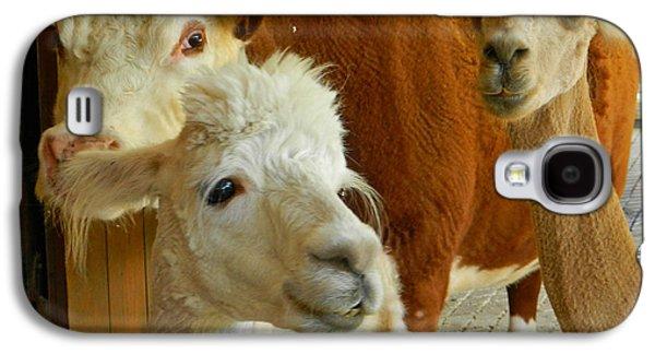 Llama Digital Galaxy S4 Cases - All Eyes On You Galaxy S4 Case by Emmy Marie Vickers