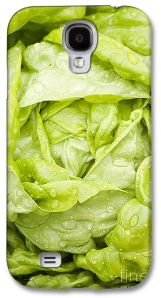 Rosaceae Galaxy S4 Cases - All the Year Round Galaxy S4 Case by Anne Gilbert