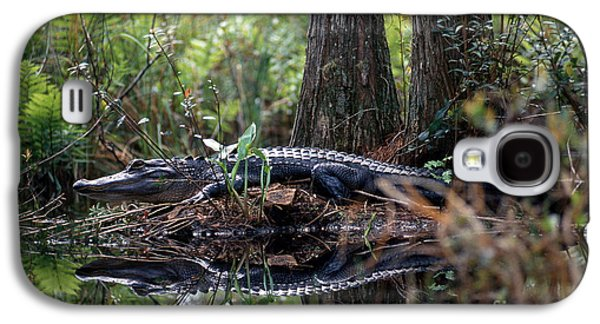 Alligator In Okefenokee Swamp Galaxy S4 Case by William H. Mullins