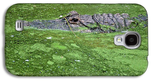 Alga Galaxy S4 Cases - Alligator in Swamp Galaxy S4 Case by Aimee L Maher Photography and Art