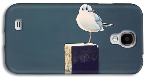 Seabirds Galaxy S4 Cases - Am I Alone Galaxy S4 Case by Wim Lanclus
