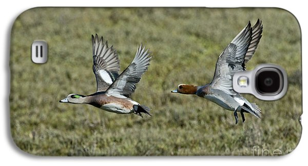 Two Ducks In Flight Photographs Galaxy S4 Cases - American & Eurasian Wigeons Galaxy S4 Case by Anthony Mercieca