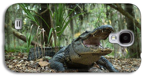 American Alligator (alligator Galaxy S4 Case by Pete Oxford