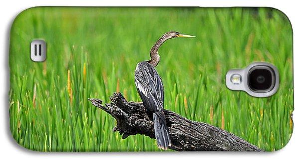 American Anhinga Galaxy S4 Case by Al Powell Photography USA