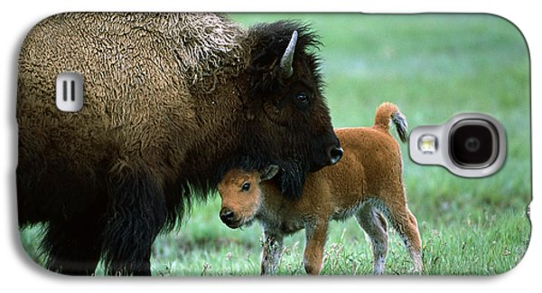 American Bison Galaxy S4 Cases - American Bison and Calf Yellowstone NP Galaxy S4 Case by Suzi Eszterhas