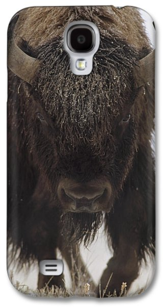 American Bison Galaxy S4 Cases - American Bison Portrait Galaxy S4 Case by Tim Fitzharris