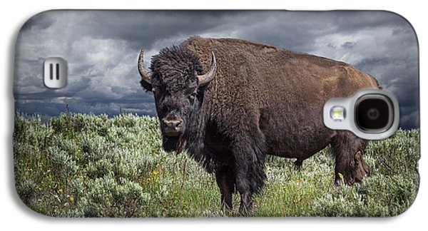 American Bison Galaxy S4 Cases - American Buffalo or Bison in Yellowstone Galaxy S4 Case by Randall Nyhof