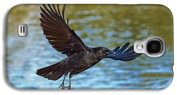Us Wildllife Galaxy S4 Cases - American Crow Flying Over Water Galaxy S4 Case by Anthony Mercieca