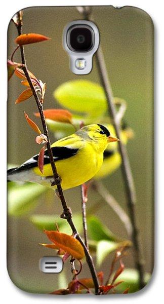 Rollosphotos Digital Art Galaxy S4 Cases - American Goldfinch-2 Galaxy S4 Case by Christina Rollo