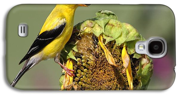 Americans Pyrography Galaxy S4 Cases - American Goldfinch on Sunflower Galaxy S4 Case by Daniel Behm