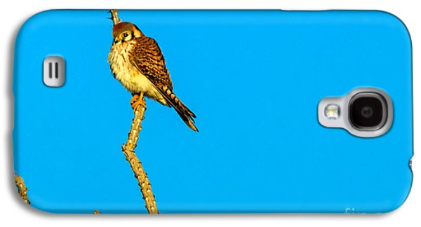 Slash Galaxy S4 Cases - American Kestrel  Galaxy S4 Case by Robert Bales