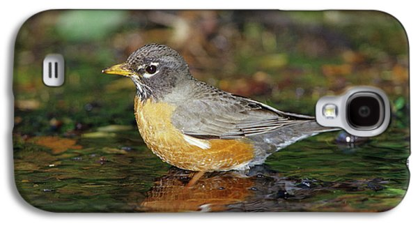 American Robin (turdis Migratorius Galaxy S4 Case by Richard and Susan Day