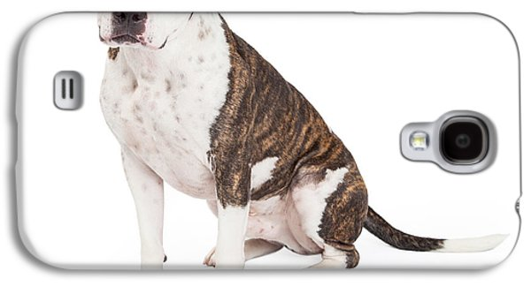 Landmarks Photographs Galaxy S4 Cases - American Staffordshire Terrier Cross Dog Sitting Galaxy S4 Case by Susan  Schmitz