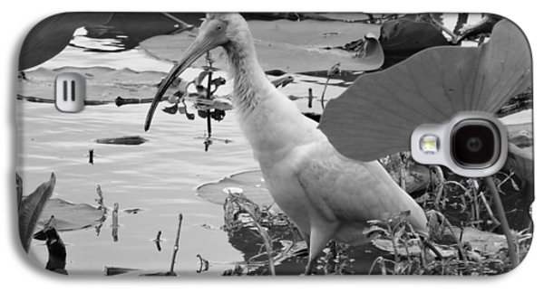 American White Ibis Black And White Galaxy S4 Case by Dan Sproul