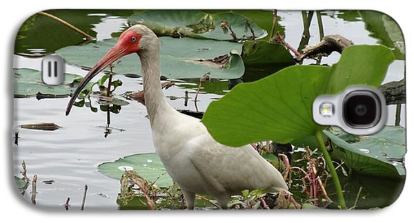 American White Ibis In Brazos Bend Galaxy S4 Case by Dan Sproul