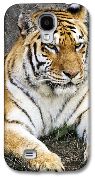 Man Cave Photographs Galaxy S4 Cases - Amur Tiger Galaxy S4 Case by Adam Romanowicz