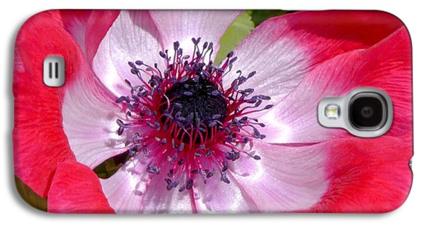 Floral Photographs Galaxy S4 Cases - Anemone De Caen Galaxy S4 Case by Rona Black
