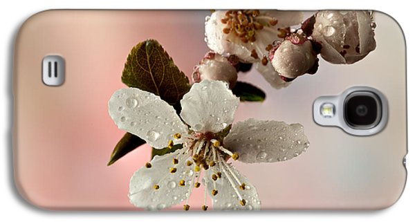 Cherry Blossoms Galaxy S4 Cases - Announcing Spring Galaxy S4 Case by Mary Jo Allen