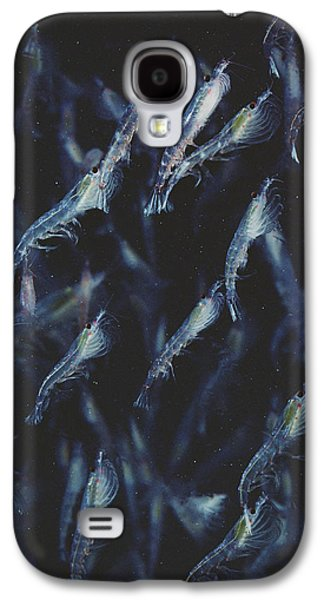 Plankton Galaxy S4 Cases - Antarctic Krill Schooling Antarctica Galaxy S4 Case by Flip Nicklin