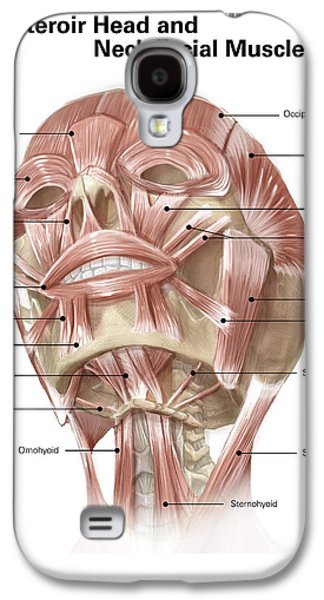 Anterior Neck And Facial Muscles Galaxy S4 Case by Alan Gesek