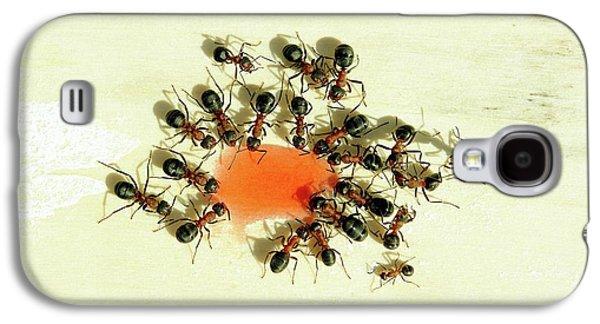 Ants Feeding Galaxy S4 Case by Heiti Paves