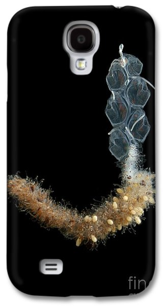 Plankton Galaxy S4 Cases - Apolemia Jellyfish Galaxy S4 Case by Bathybiologica/natural History Museum, London