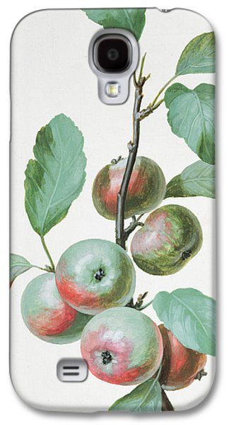 Food And Beverage Drawings Galaxy S4 Cases - Apples Galaxy S4 Case by Pierre Joseph Redoute