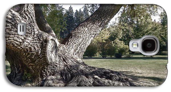 Tree Roots Galaxy S4 Cases - Arboretum Tree Galaxy S4 Case by Daniel Hagerman