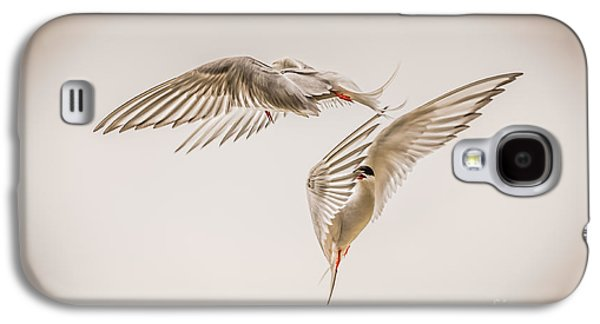 Tern Galaxy S4 Cases - Arctic Tern - sterna paradisaea - Pas de deux -hdr Galaxy S4 Case by Ian Monk