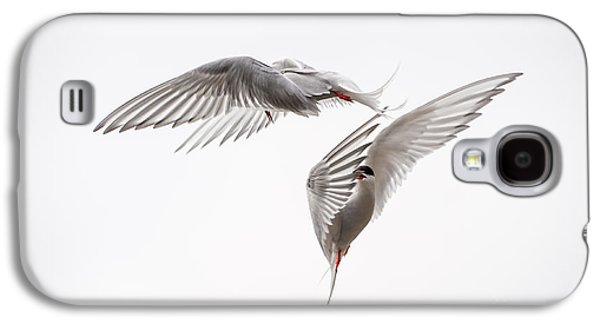 Tern Galaxy S4 Cases - Arctic Tern - sterna paradisaea - Pas de deux  Galaxy S4 Case by Ian Monk