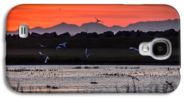Tern Galaxy S4 Cases - Arctic Terns And Ducks Galaxy S4 Case by Panoramic Images