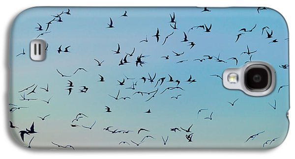 Tern Galaxy S4 Cases - Arctic Terns Flying, Reykjavik, Iceland Galaxy S4 Case by Panoramic Images