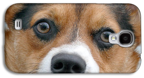 Dogs Digital Galaxy S4 Cases - Are You Looking At Me Galaxy S4 Case by Mike McGlothlen