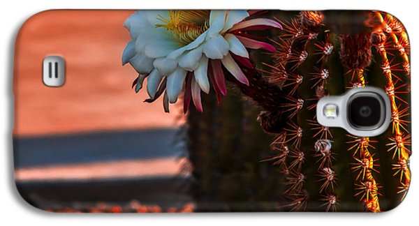 Haybale Galaxy S4 Cases - Argentine Cactus Galaxy S4 Case by Robert Bales
