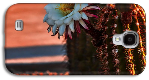 Argentine Cactus Galaxy S4 Case by Robert Bales