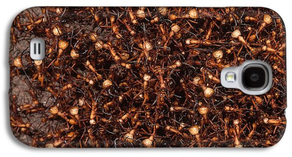 Army Ants Galaxy S4 Case by Art Wolfe