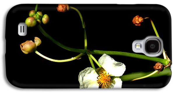 St. Lucie County Galaxy S4 Cases - Arrowhead Buds and Blossom Galaxy S4 Case by Grace Dillon