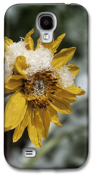 Harsh Conditions Galaxy S4 Cases - Arrowleaf Balsamroot in Snow Galaxy S4 Case by Wildlife Fine Art