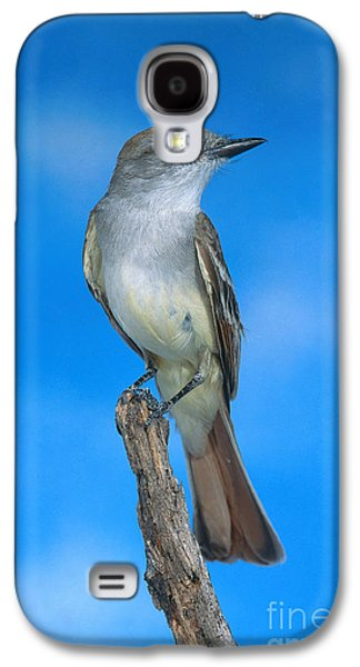 Ash-throated Flycatcher Galaxy S4 Case by Anthony Mercieca