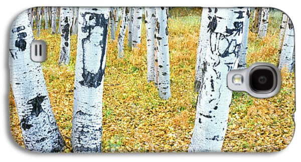 Aspen Trees In A Grove, Hart Prairie Galaxy S4 Case by Panoramic Images