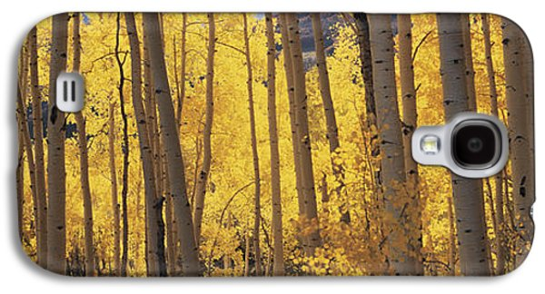 No People Photographs Galaxy S4 Cases - Aspen Trees In Autumn, Colorado, Usa Galaxy S4 Case by Panoramic Images