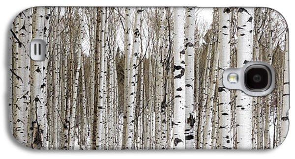Aspens In Winter Panorama - Colorado Galaxy S4 Case by Brian Harig