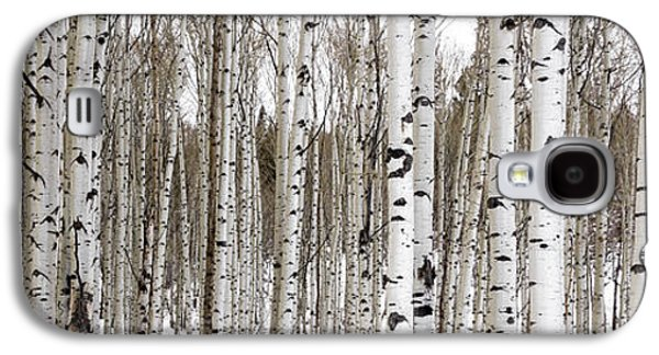 Mountain Photographs Galaxy S4 Cases - Aspens In Winter Panorama - Colorado Galaxy S4 Case by Brian Harig