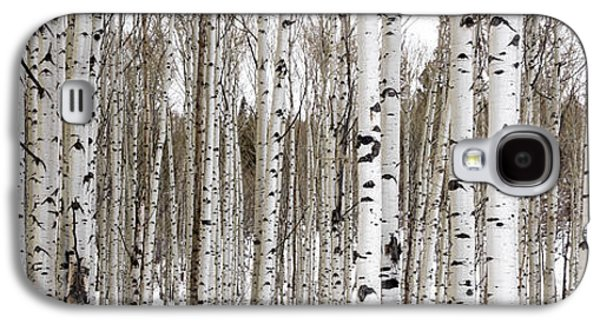 Trees Photographs Galaxy S4 Cases - Aspens In Winter Panorama - Colorado Galaxy S4 Case by Brian Harig